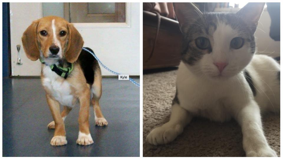 Pet of the Week - Kyle & Basil