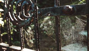 Creepy Spiderwebs Halloween